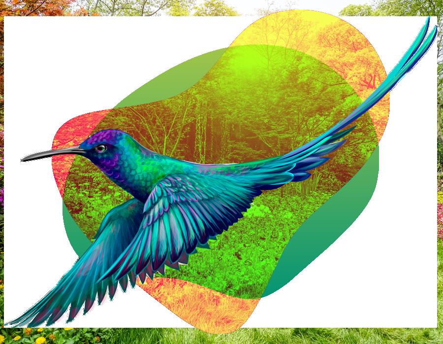 BirdWatching - Chapada dos Veadeiros